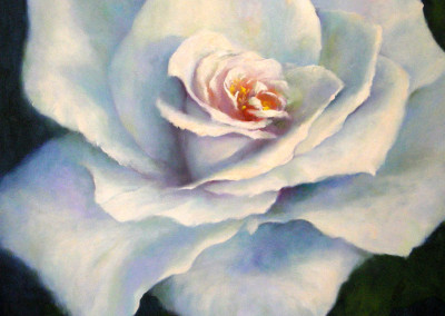 White Rose No 2 - 60 x 60cm