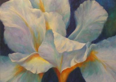 Iris No 2 - 76 x 76cm